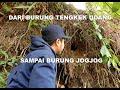 Mencari Sarang Burung Tengkek Udang  Mp3 - Mp4 Download