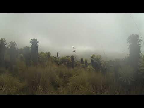Phonography : Paramo - Los Nevados NP (4.936187,-75.312183)