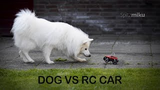 DOG VS R.C. CAR