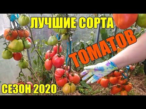 Лучшие сорта томатов 2020