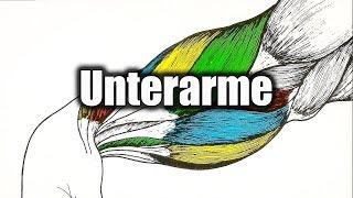 Unterarmtraining - die besten Übungen!