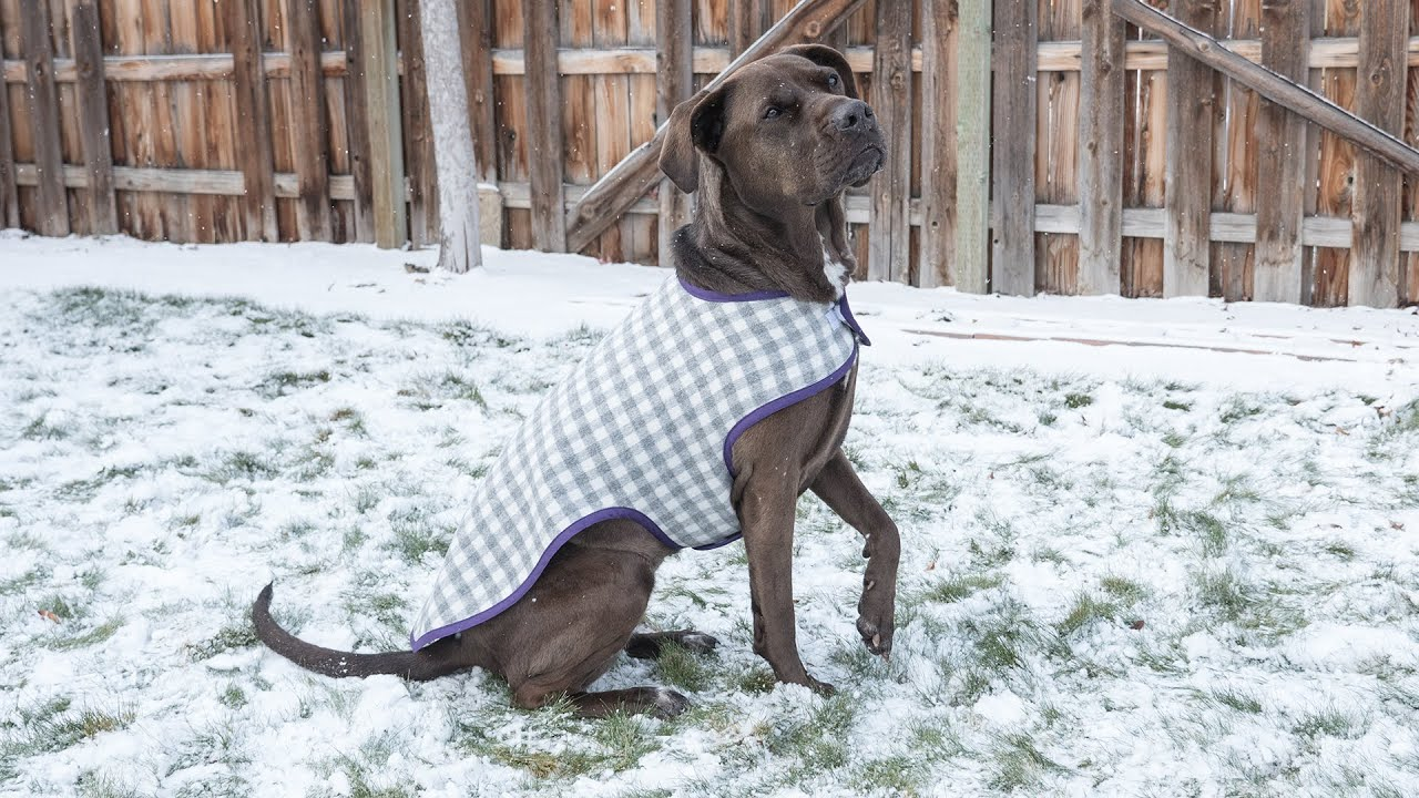 How to Sew a Dog Coat   Pattern and Assembly   YouTube