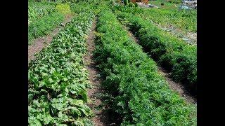 видео О чём не стоит забывать садоводам и огородникам