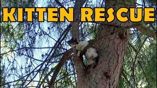 Kitten who could not get off the tree was rescued.