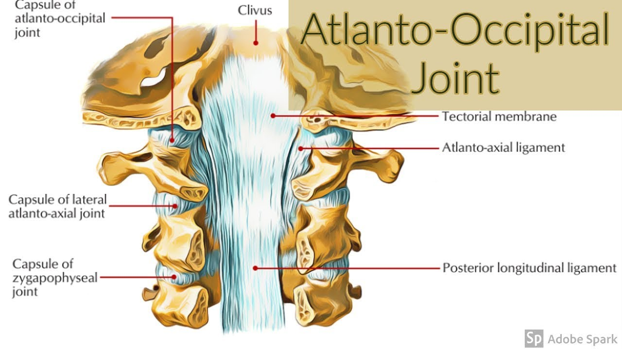 Atlanto Occipital Joints