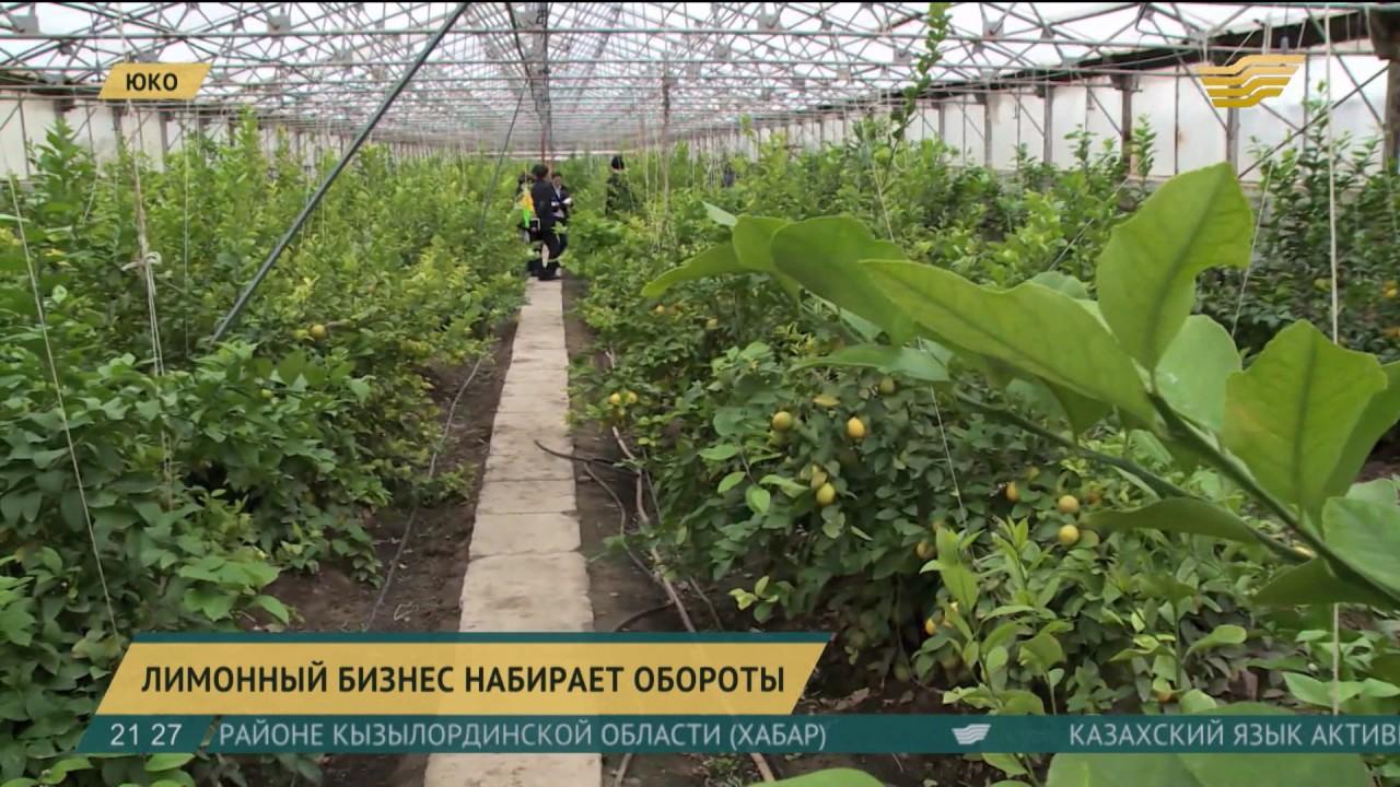 Бизнес план выращивание лимона бизнес идея клининговые услуги