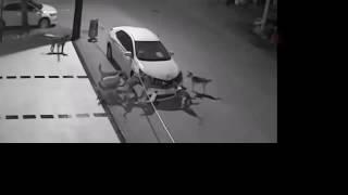 В Волгограде стая собак оторвала бампер у авто