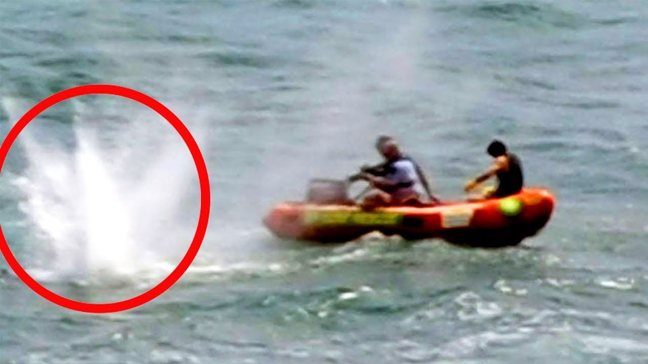 Download 10 Shark Attacks That Were Caught on Film