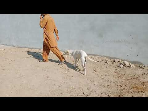 dog meeting first time with black indian goat