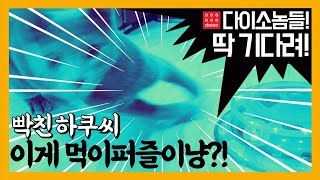[고양이 장난감] 다이소 빙글빙글 먹이퍼즐완구 리뷰 (…