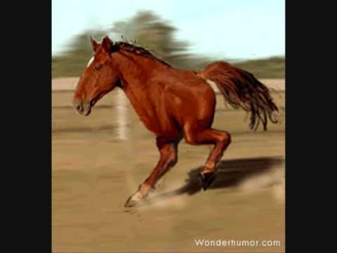 running horse (VERY FUNNY) LMAO - YouTube - photo#50
