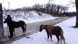 March 7, 2013 Rescue 001 Illinois Horse Rescue of Will County
