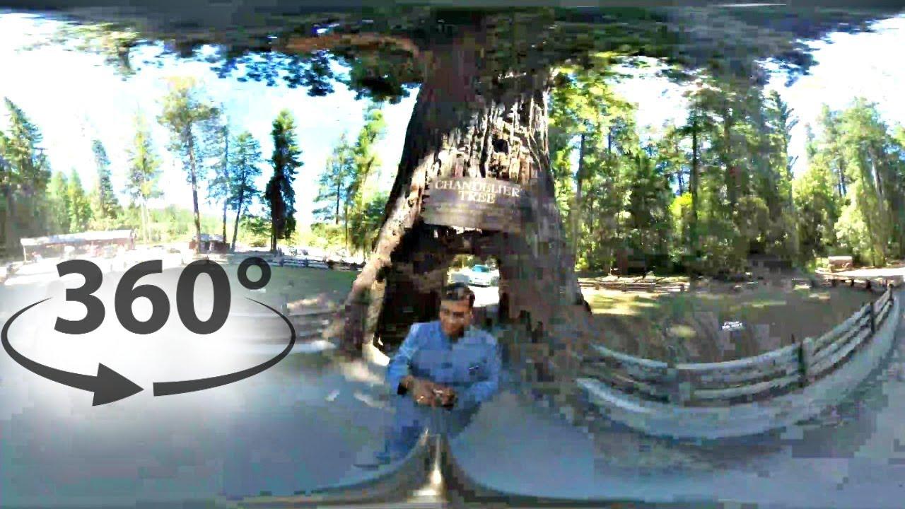Vr 360 video walking through 2400 year old chandelier tree vr 360 video walking through 2400 year old chandelier tree leggett ca arubaitofo Choice Image