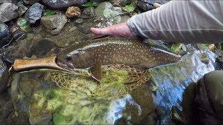 2018-7/30 渓流flyfishing 渇水の狭い支流に大イワナ thumbnail