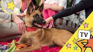 Pies najlepszym przyjacielem człowieka (My3 Super Gość) My3 - TV dla Dzieci