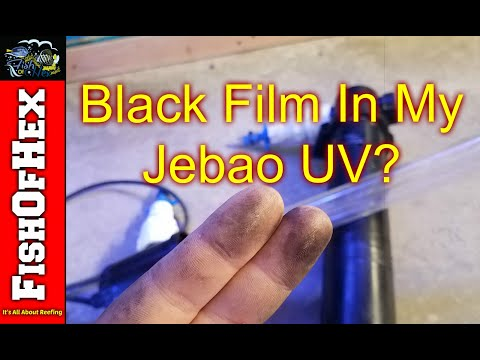 black-film-inside-jebao-uv-sterilizer- -guess-it's-true..-now-what?