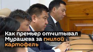 Как премьер отчитывал Мурашева за гнилой картофель видео