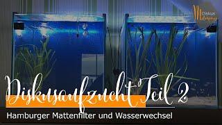 Installation Hamburger Mattenfilter und Wasserwechsel - Unsere Diskus-Aufzuchtstation entsteht #2