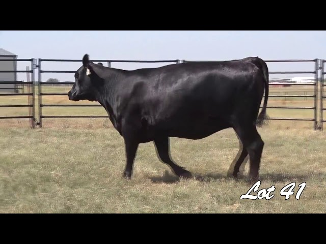 Pollard Farms Lot 41