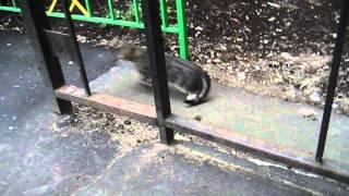 Пробежка кота