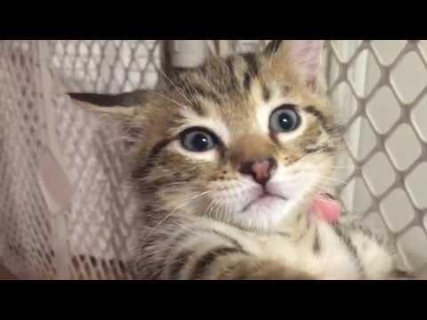 5 Week Old Kittens Jumpy After Vacuum!