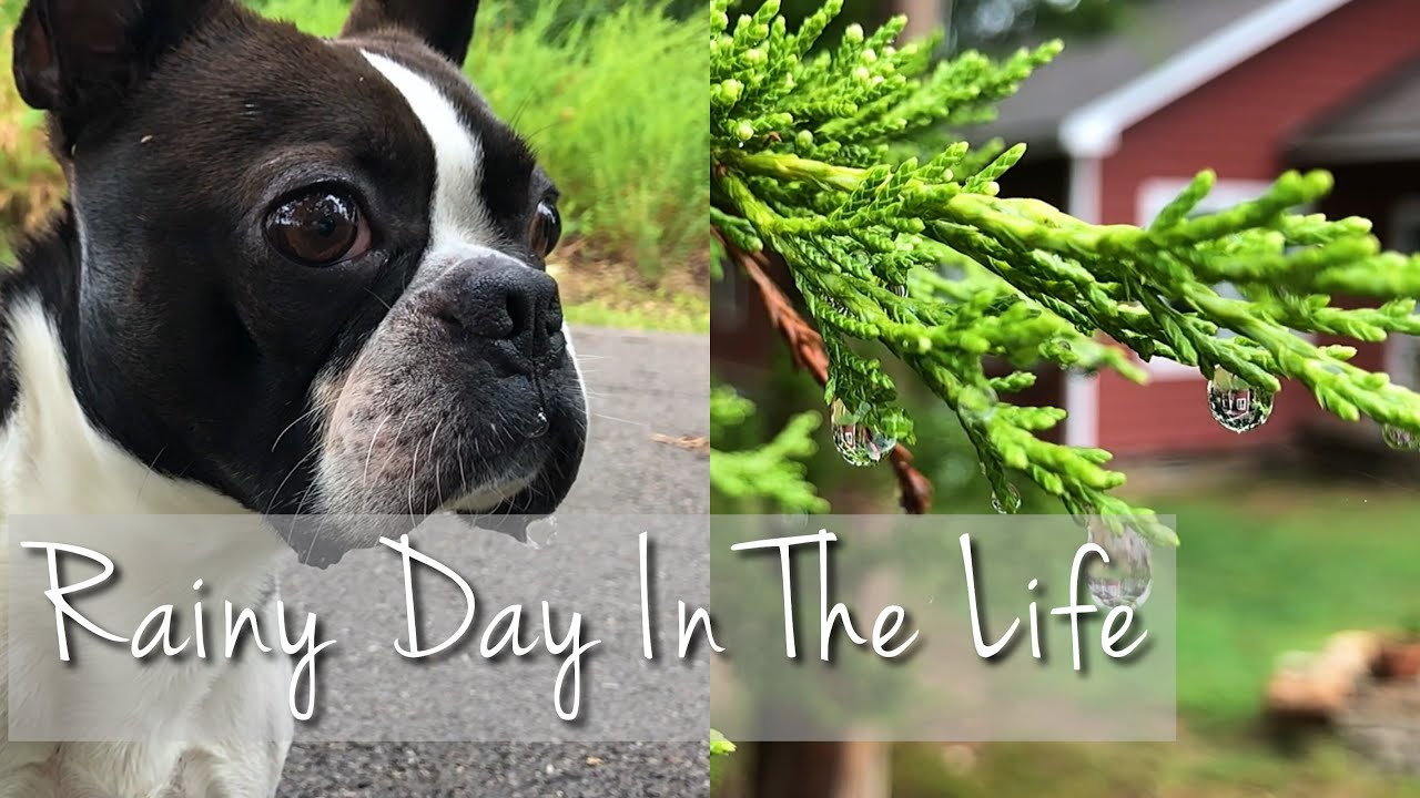 Rainy Day In The Life | spending time with nature and my dog Atlas