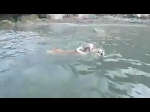 Dog Swimming Competition