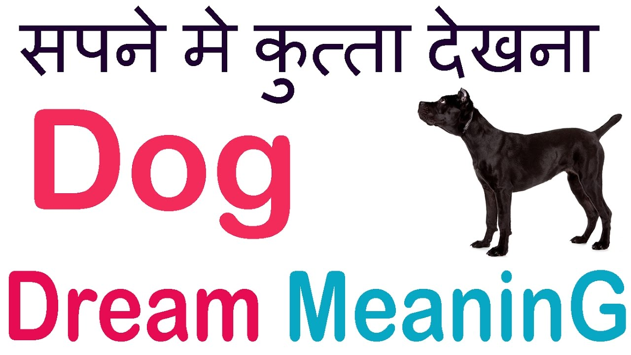 Sapne me🐕kutta dekhna💭सपने मैं कुत्ता देखना DOG DREAM INTERPRETATION Dog  Dream Meaning in hindi✍