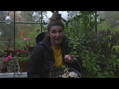Jessicas trädgård -denna vecka hemma hos Jessica Lyon är det sådder, höstplantering och växthusliv