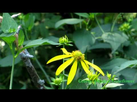 WILDFLOWERS: A Common Man