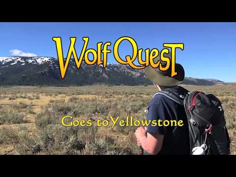 WolfQuest Goes to Yellowstone: Amethyst Mountain