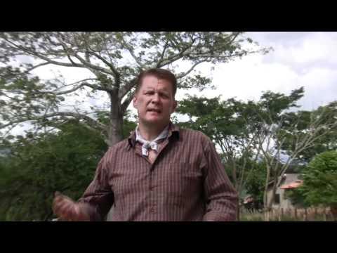 Rick Simpson Oil and Chronic Back Pain