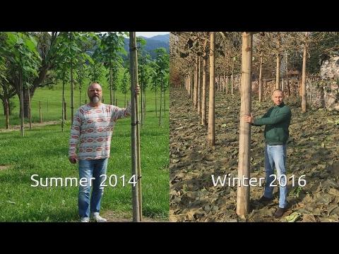 Treeme Timeline: Sample Plantation Lindau 2014 - 2016