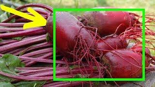 Самый ПОЛЕЗНЫЙ Овощ ! Вот ЧТО Сделают с ВАШИМ Телом ВСЕГО 100 г Свёклы в ДЕНЬ!