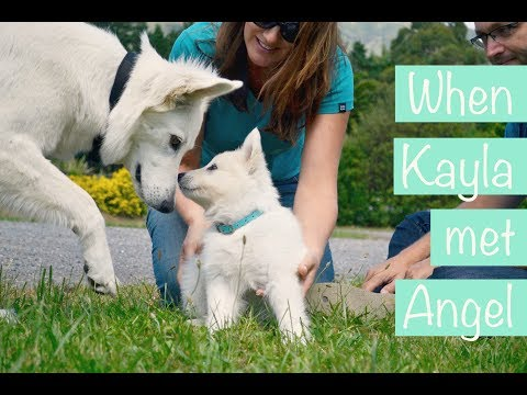 Watch The First Ever Meeting Of These Two White German Shepherd Puppies
