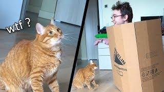 Кот VS Коробка