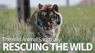 Wild Kingdom   The Wild Animal Sanctuary   Rescuing The Wild