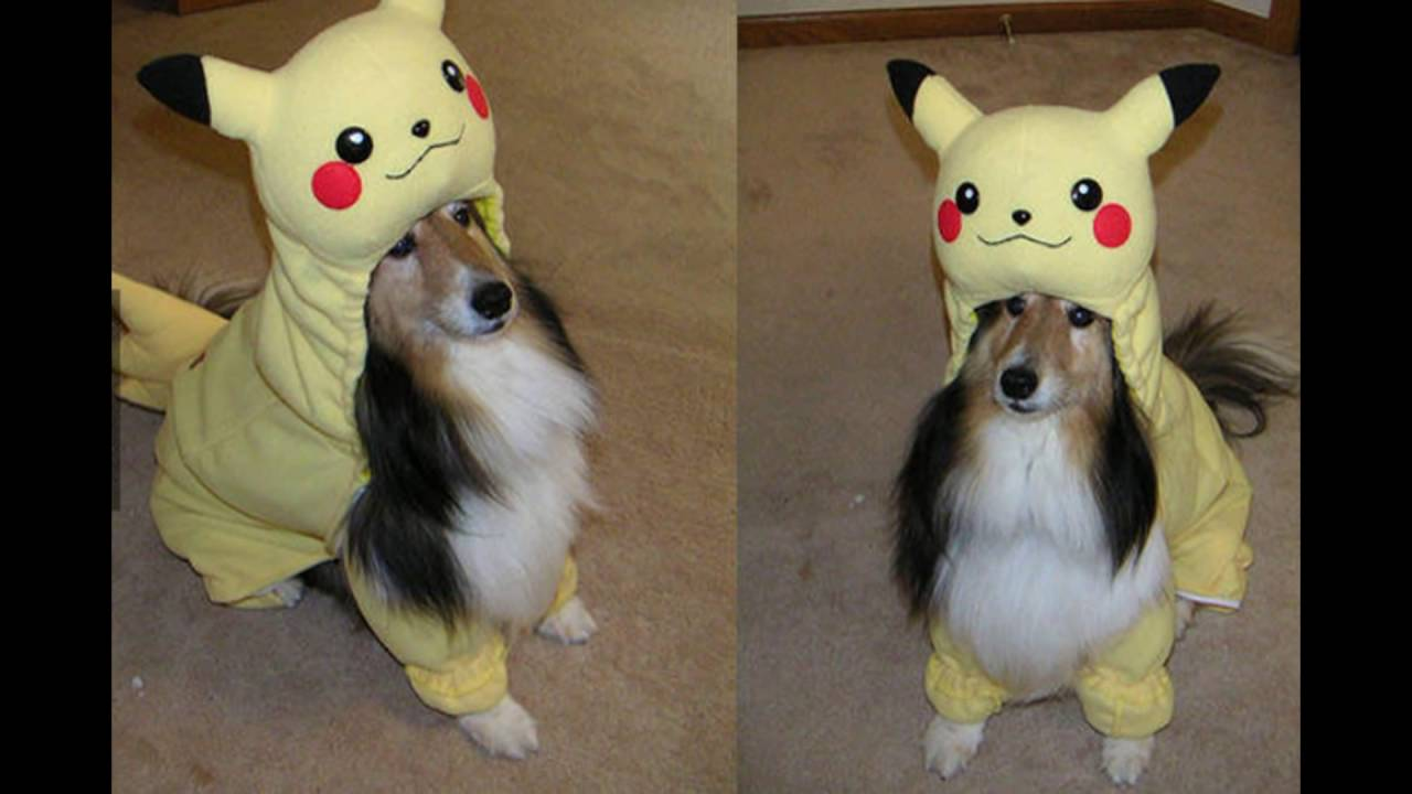 PIKACHU Halloween Costumes For DOGS And Other Pets - YouTube