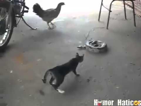 Video engraçado do wats sap