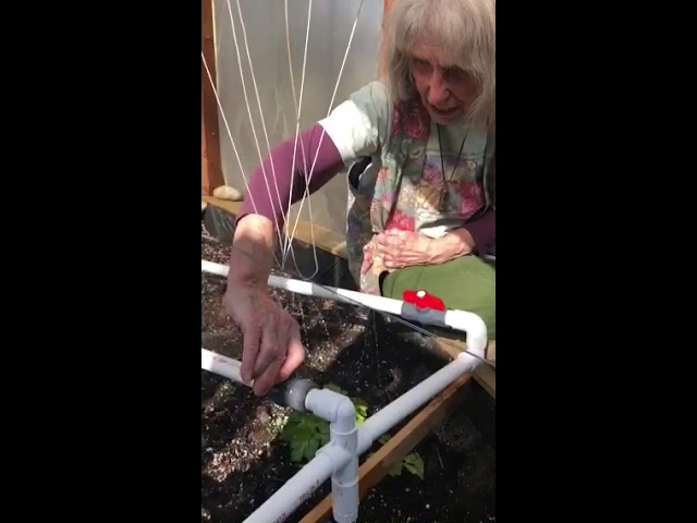 Greenhouse PVC watering system #1