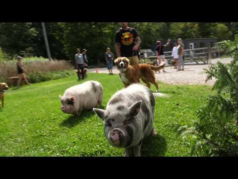 Canada dog training seminar