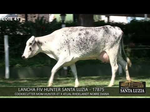 SANTA LUZIA   LOTE 41