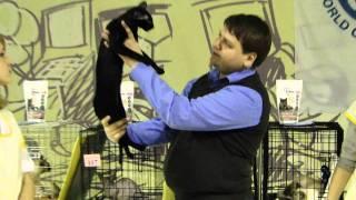 5 декабря, выставка Кошки Петербурга