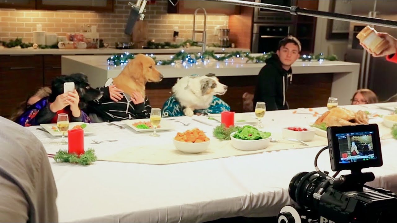 Bringing the Joy of a Holiday Feast to Rescue Pets - Freshpet