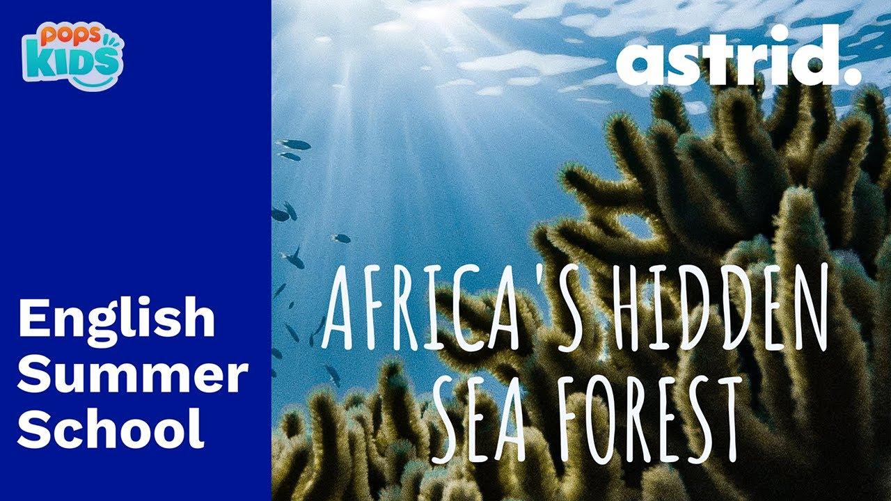 SUMMER SCHOOL - Africa's Hidden Seafores - Chương trình tiếng anh mùa hè cùng POPS Kids