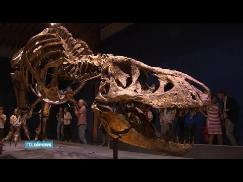 Eindelijk: T-rex in Naturalis te bezoeken - RTL NIEUWS