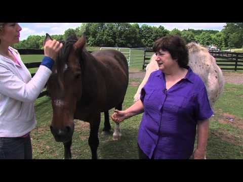 REAL HORSE RESCUES | EQUINE ADVOCATES 1 | ABC-WTEN