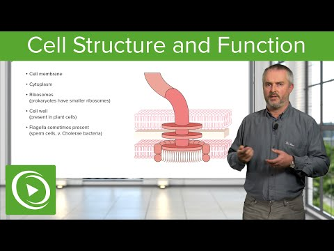 Cell Structure and Function – Biology | Lecturio