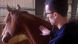 Horses Teach Bedside Manner to Future Doctors