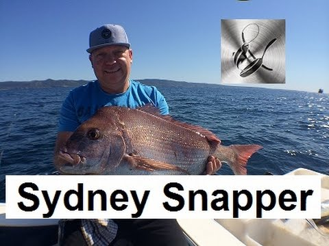 Sydney Snapper Fishing | The Hook And The Cook